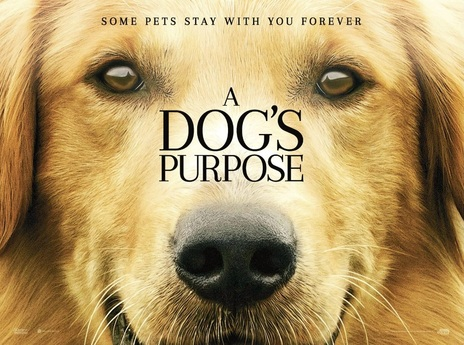 Film picture: A Dog's Purpose