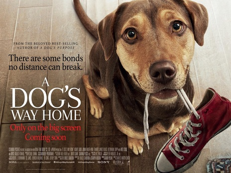 Film picture: A Dog's Way Home